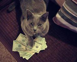 cashcats-1